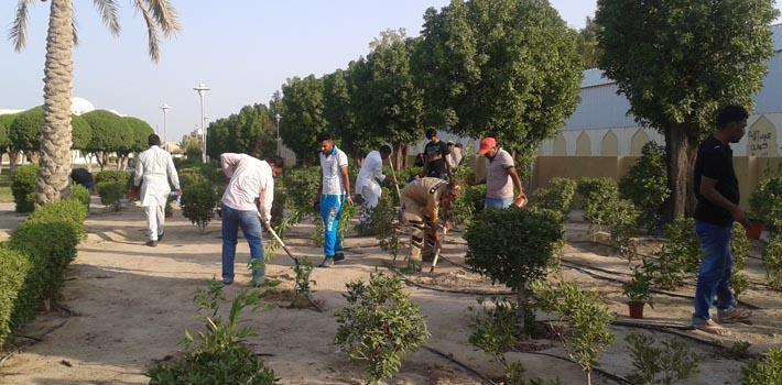 tree plantation in kuwait